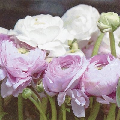 Pink & White Ranunculus Lunch Napkin 12/20 CT 340332